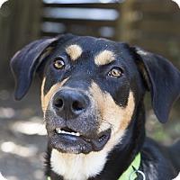 Adopt A Pet :: Mary Kate - Houston, TX