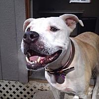 Adopt A Pet :: Gabby - Plant City, FL