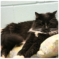 Adopt A Pet :: Tybie - Forked River, NJ