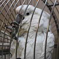 Adopt A Pet :: Noah - Punta Gorda, FL