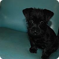 Adopt A Pet :: Marla - Albany, NY