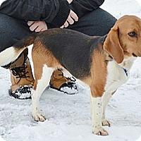 Adopt A Pet :: Danny Boy - Hamilton, ON