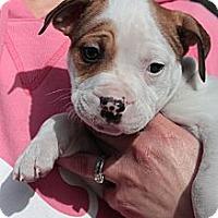 Adopt A Pet :: Gloria - Sacramento, CA