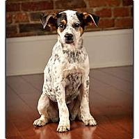 Adopt A Pet :: Tony - Owensboro, KY