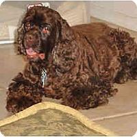 Adopt A Pet :: Candy - Scottsdale, AZ