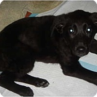 Adopt A Pet :: Chloe - Lake Forest, CA