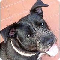 Adopt A Pet :: Bucky - Kingwood, TX