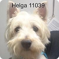 Adopt A Pet :: Helga - baltimore, MD