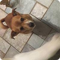 Adopt A Pet :: Big Ben - Columbus, OH