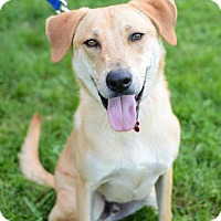 Adopt A Pet :: Hilton - Christiana, TN