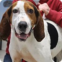 Adopt A Pet :: Jolene-Jo Jo - Elyria, OH