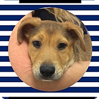 Adopt A Pet :: Chester - Miami Shores, FL
