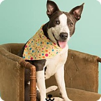 Adopt A Pet :: Maisy - Dallas, TX