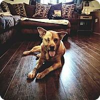 Adopt A Pet :: Falkor - Allen, TX