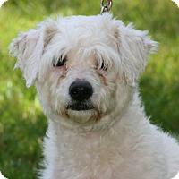Adopt A Pet :: Rascal - Carlsbad, CA