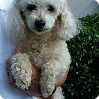 Adopt A Pet :: Sandy - Mount Pleasant, SC