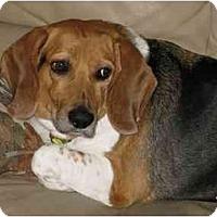 Adopt A Pet :: Rylo - Phoenix, AZ