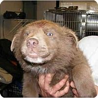 Adopt A Pet :: Bear Cub - Alexandria, VA