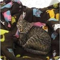 Adopt A Pet :: Lolita - Phoenix, AZ
