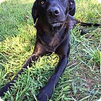 Adopt A Pet :: Trocar - Russellville, KY