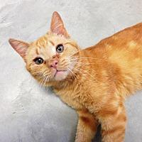 Adopt A Pet :: Valour - Creston, BC