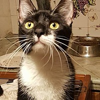 Adopt A Pet :: Miss Muffett - Hazlet, NJ