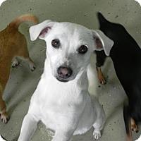 Adopt A Pet :: Lola - Fresno, CA