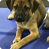 Terrier (Unknown Type, Small) Mix Puppy for adoption in Redding, California - Flutter Shy My Little Pony Lit