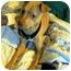 Photo 3 - Terrier (Unknown Type, Medium) Mix Dog for adoption in Xenia, Ohio - Sasha