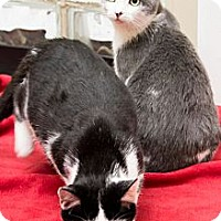 Adopt A Pet :: Tweety and Sylvester - Chicago, IL