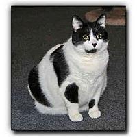 Adopt A Pet :: Leah - Howell, MI
