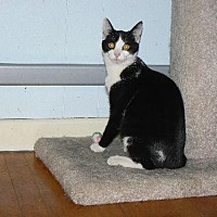 Adopt A Pet :: Roman - VIDEO!! - Jenkintown, PA