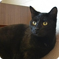 Adopt A Pet :: Jazzy - Akron, OH