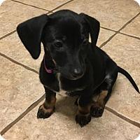 Adopt A Pet :: Six - Spring, TX