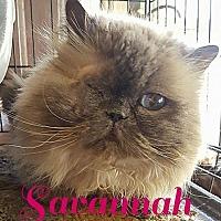 Adopt A Pet :: Savannah - Capshaw, AL