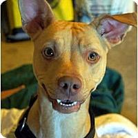 Adopt A Pet :: Sasha - Xenia, OH