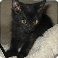 Adopt A Pet :: Mindy - Davis, CA