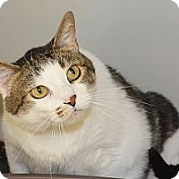 Adopt A Pet :: Diesel - Lincoln, NE