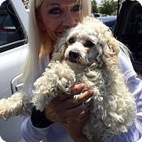 Adopt A Pet :: Tate - Gilbert, AZ