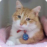 Adopt A Pet :: Jingle - Merrifield, VA