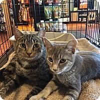 Adopt A Pet :: Tia - Horsham, PA