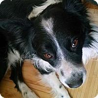 Adopt A Pet :: Oreo - ROME, NY