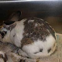 Adopt A Pet :: A1668625 - Los Angeles, CA