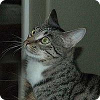 Adopt A Pet :: Twilight - Chula Vista, CA