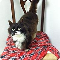 Adopt A Pet :: Jasmine - Chesterfield, VA