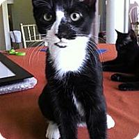 Adopt A Pet :: Tibbals - Reston, VA