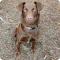 Adopt A Pet :: Hazel - Cumming, GA