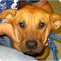 Adopt A Pet :: SweetiePie - Kingwood, TX