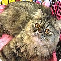 Adopt A Pet :: Cocoa Puff - Beverly Hills, CA