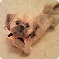 Adopt A Pet :: Charles - Marietta, GA